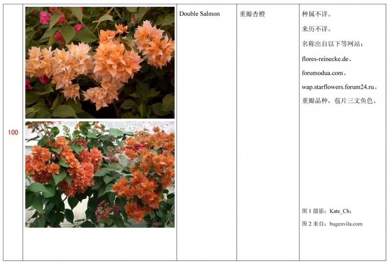 名称未核准的三角梅栽培品种收录表101.jpg