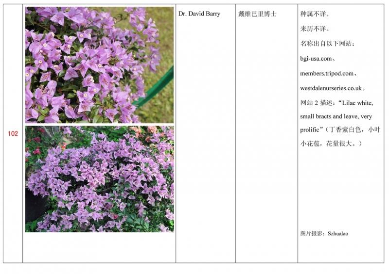 名称未核准的三角梅栽培品种收录表103.jpg