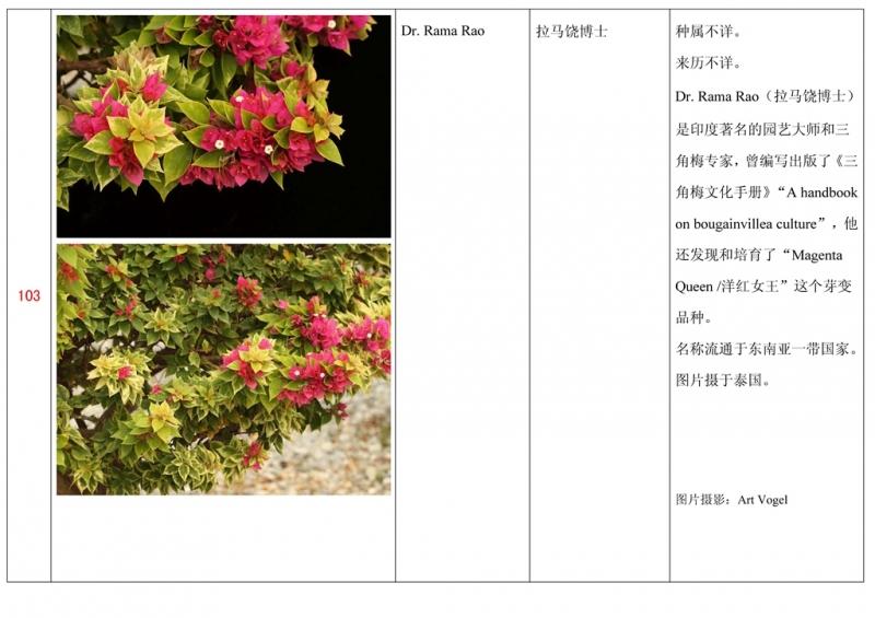 名称未核准的三角梅栽培品种收录表104.jpg