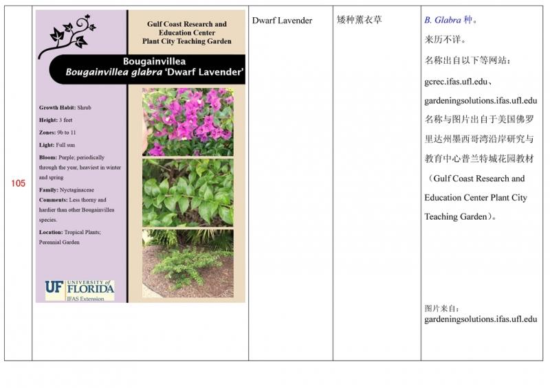 名称未核准的三角梅栽培品种收录表106.jpg