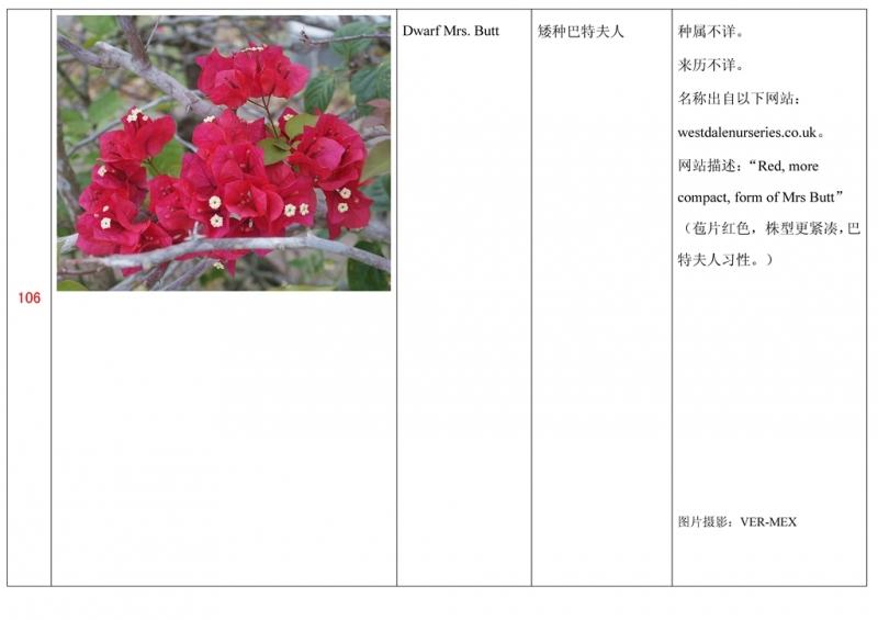 名称未核准的三角梅栽培品种收录表107.jpg