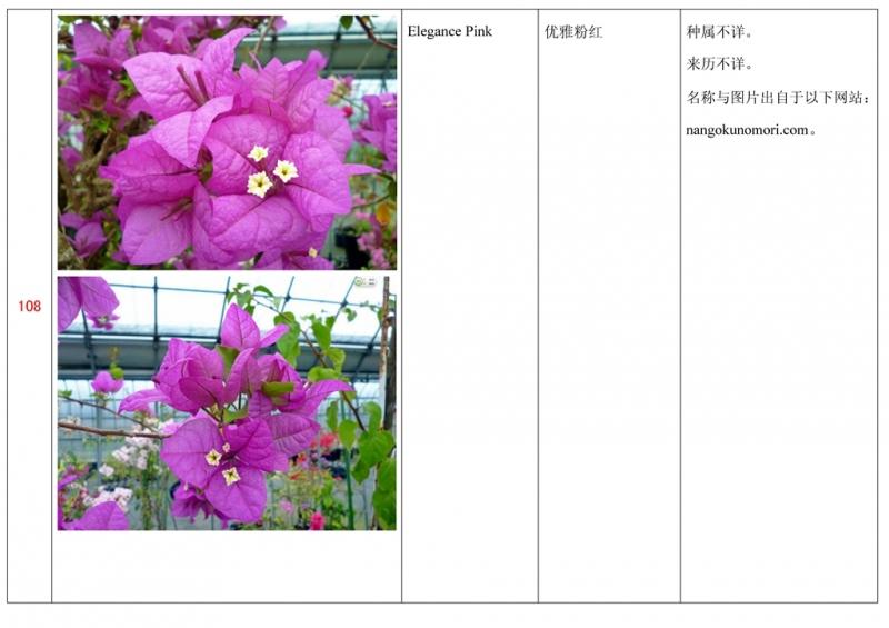 名称未核准的三角梅栽培品种收录表109.jpg