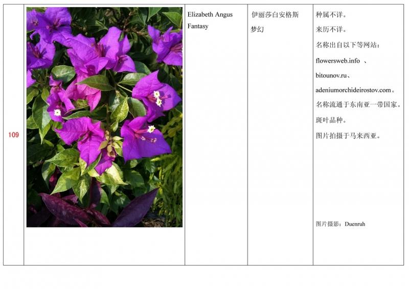 名称未核准的三角梅栽培品种收录表110.jpg