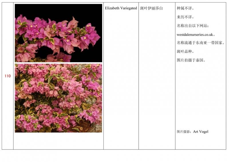 名称未核准的三角梅栽培品种收录表111.jpg