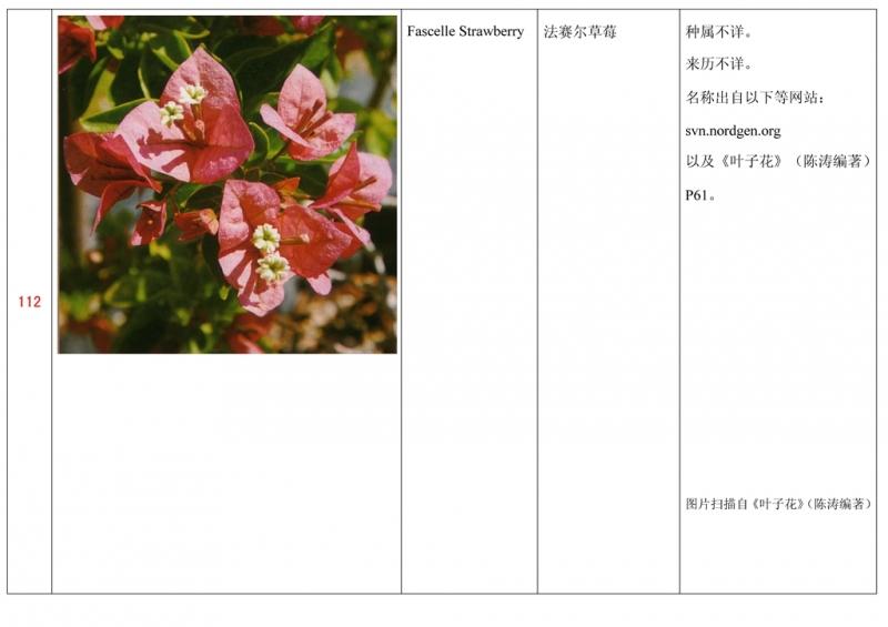 名称未核准的三角梅栽培品种收录表113.jpg