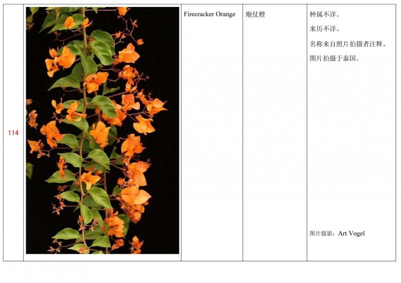 名称未核准的三角梅栽培品种收录表115.jpg