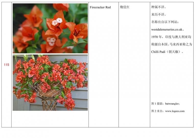 名称未核准的三角梅栽培品种收录表116.jpg