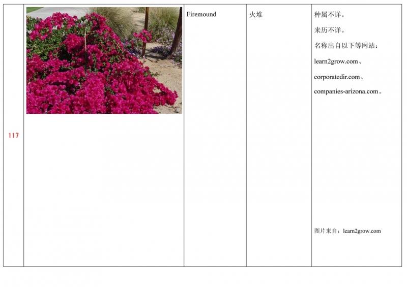名称未核准的三角梅栽培品种收录表118.jpg