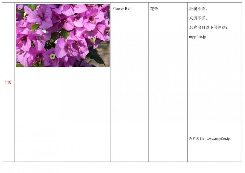 名称未核准的三角梅栽培品种收录表119.jpg