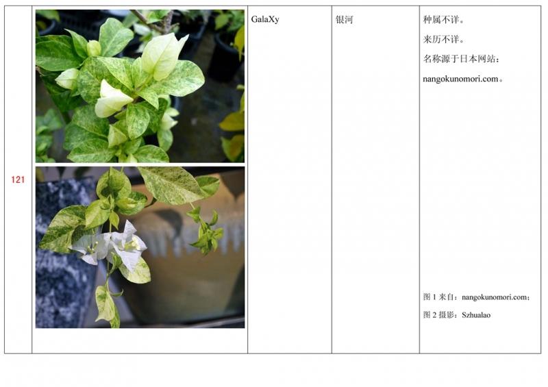 名称未核准的三角梅栽培品种收录表122.jpg