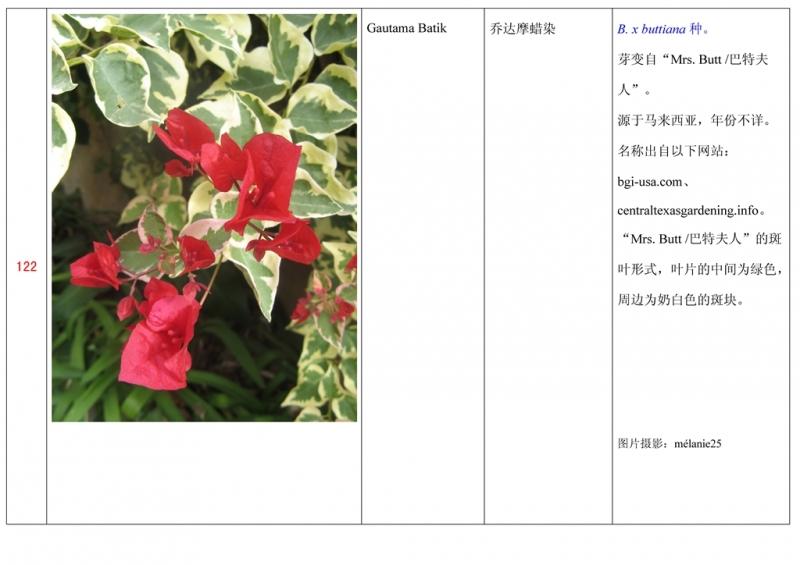 名称未核准的三角梅栽培品种收录表123.jpg