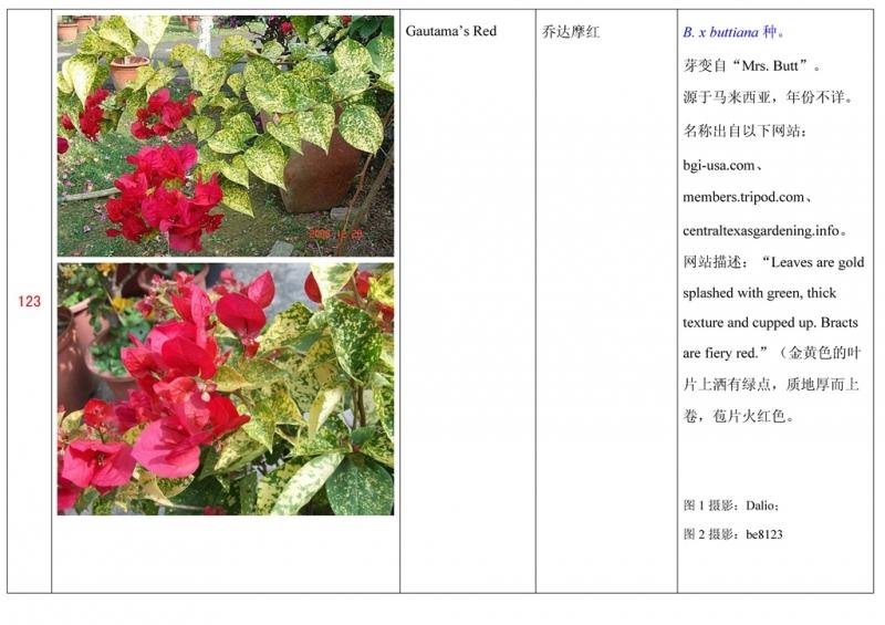 名称未核准的三角梅栽培品种收录表124.jpg