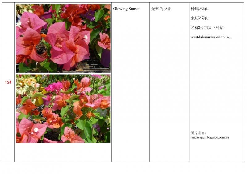 名称未核准的三角梅栽培品种收录表125.jpg