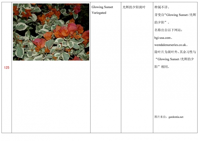 名称未核准的三角梅栽培品种收录表126.jpg