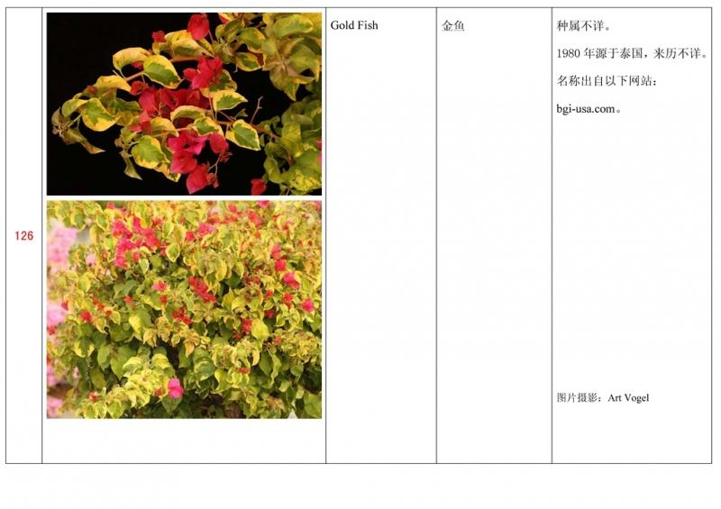 名称未核准的三角梅栽培品种收录表127.jpg
