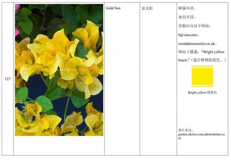 名称未核准的三角梅栽培品种收录表128.jpg