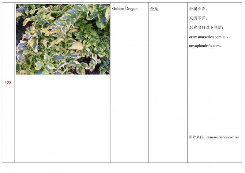 名称未核准的三角梅栽培品种收录表129.jpg