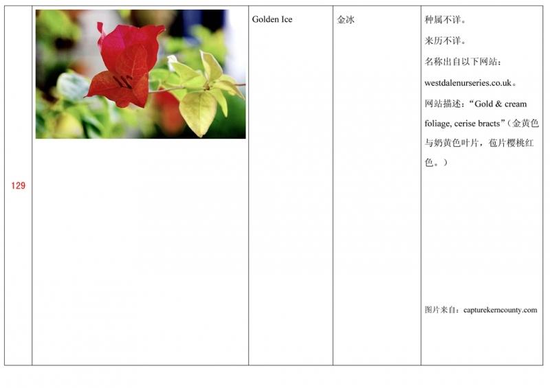 名称未核准的三角梅栽培品种收录表130.jpg