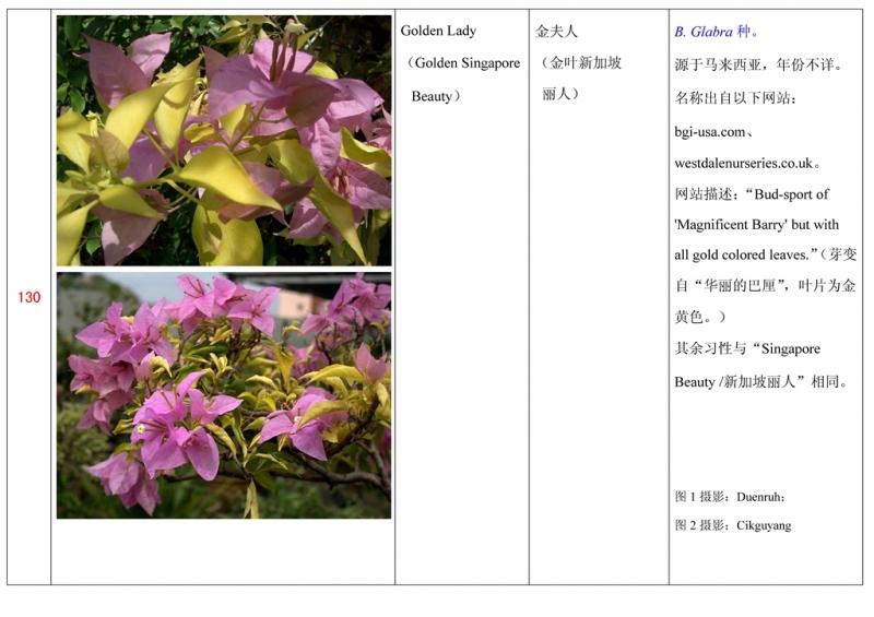 名称未核准的三角梅栽培品种收录表131.jpg