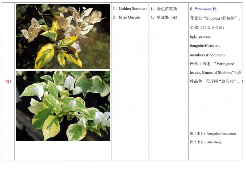 名称未核准的三角梅栽培品种收录表132.jpg