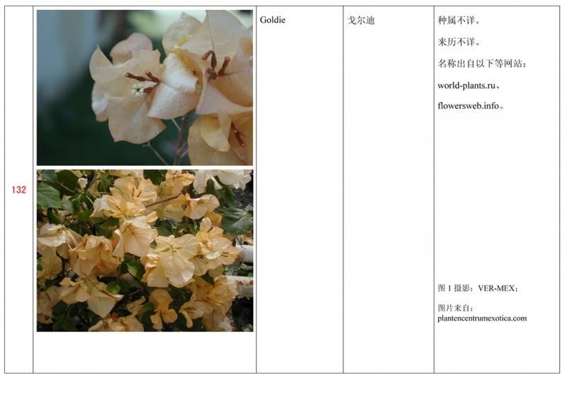名称未核准的三角梅栽培品种收录表133.jpg