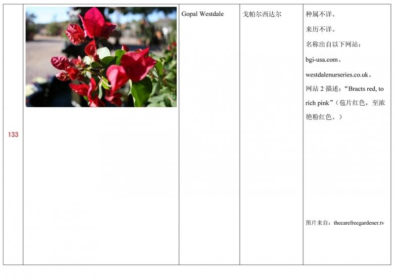 名称未核准的三角梅栽培品种收录表134.jpg