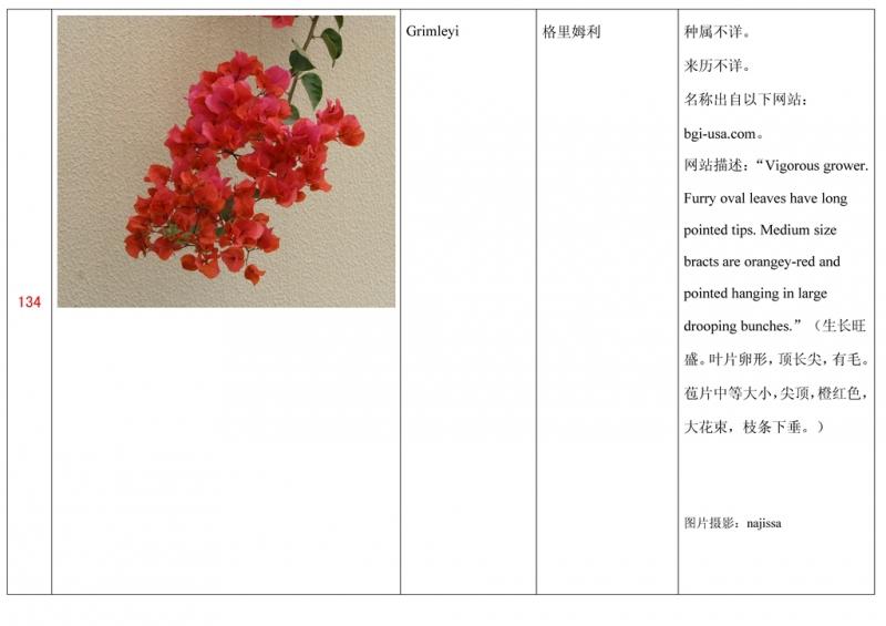 名称未核准的三角梅栽培品种收录表135.jpg