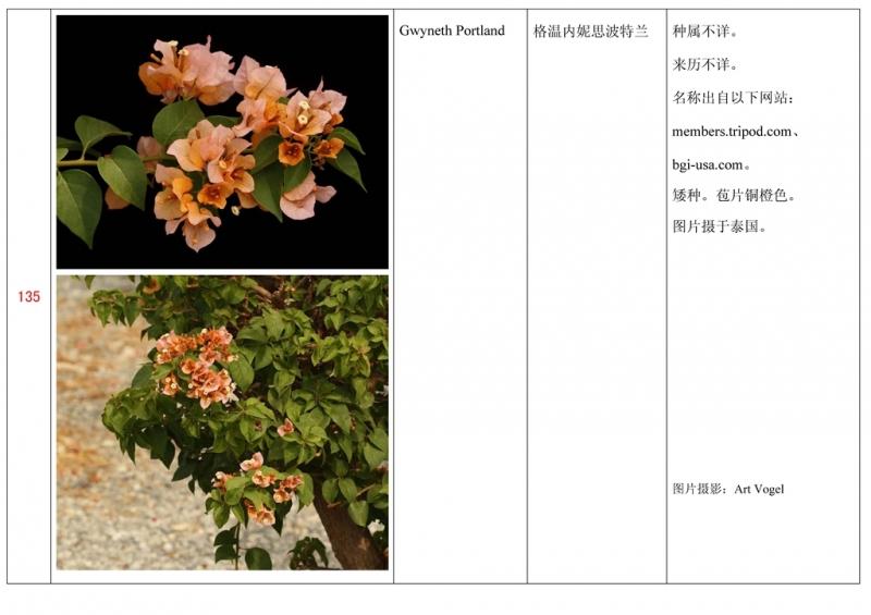 名称未核准的三角梅栽培品种收录表136.jpg
