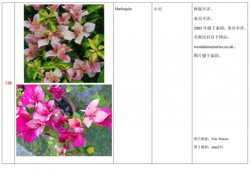 名称未核准的三角梅栽培品种收录表137.jpg