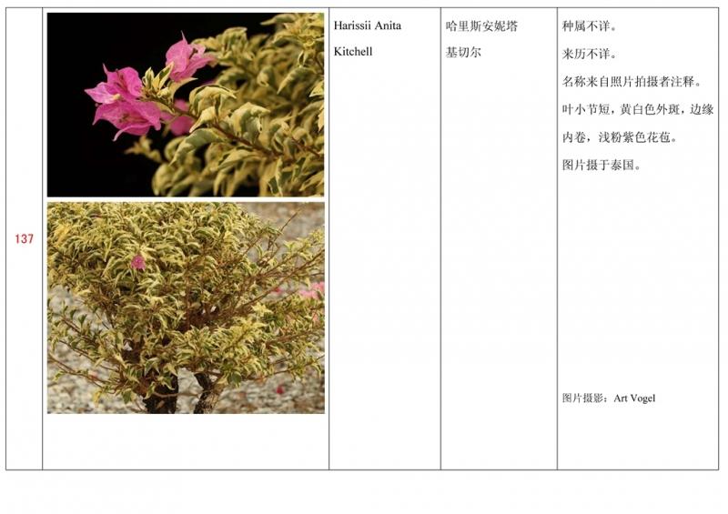 名称未核准的三角梅栽培品种收录表138.jpg