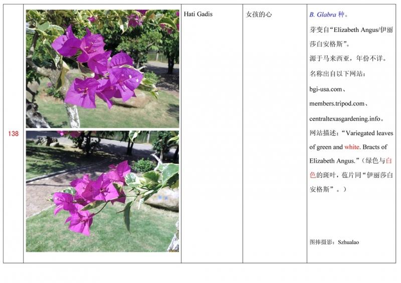 名称未核准的三角梅栽培品种收录表139.jpg