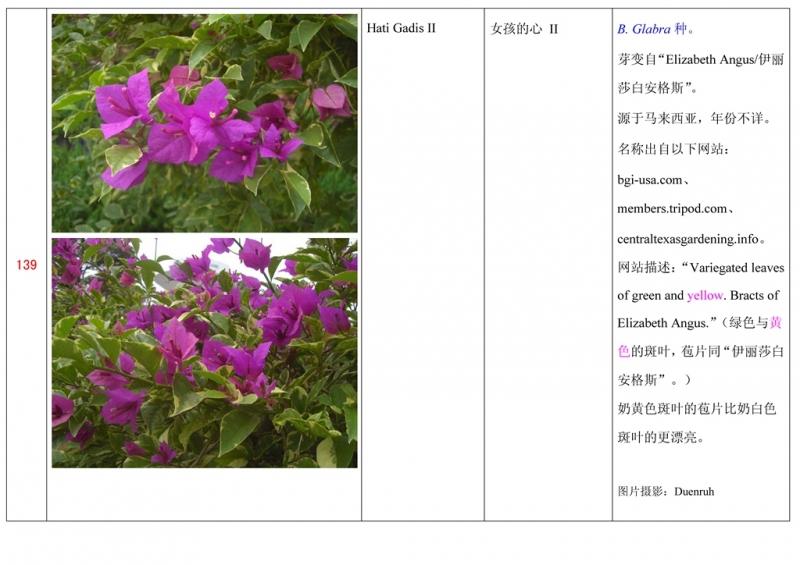 名称未核准的三角梅栽培品种收录表140.jpg
