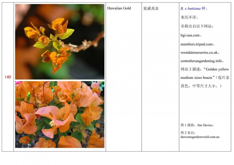 名称未核准的三角梅栽培品种收录表141.jpg