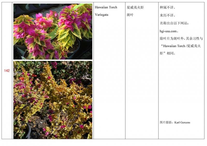 名称未核准的三角梅栽培品种收录表143.jpg