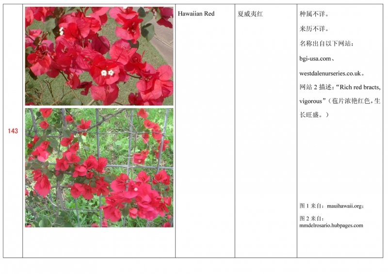 名称未核准的三角梅栽培品种收录表144.jpg