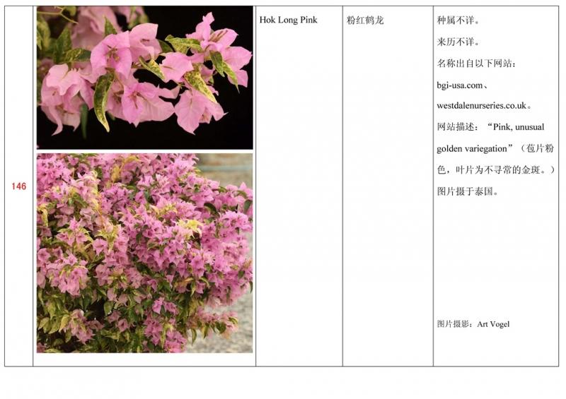 名称未核准的三角梅栽培品种收录表147.jpg