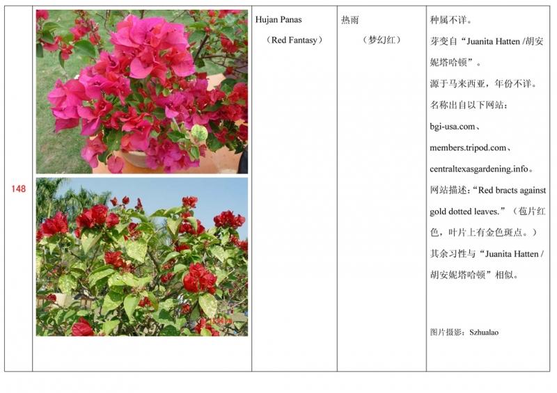 名称未核准的三角梅栽培品种收录表149.jpg