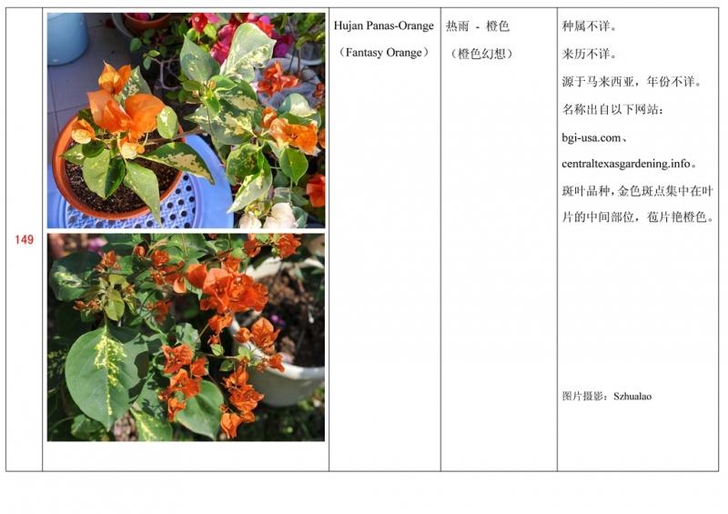 名称未核准的三角梅栽培品种收录表150.jpg