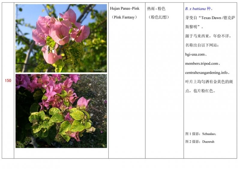 名称未核准的三角梅栽培品种收录表151.jpg