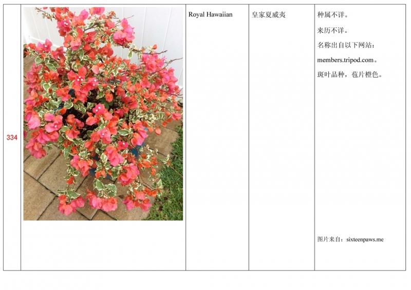 名称未核准的三角梅栽培品种收录表335.jpg