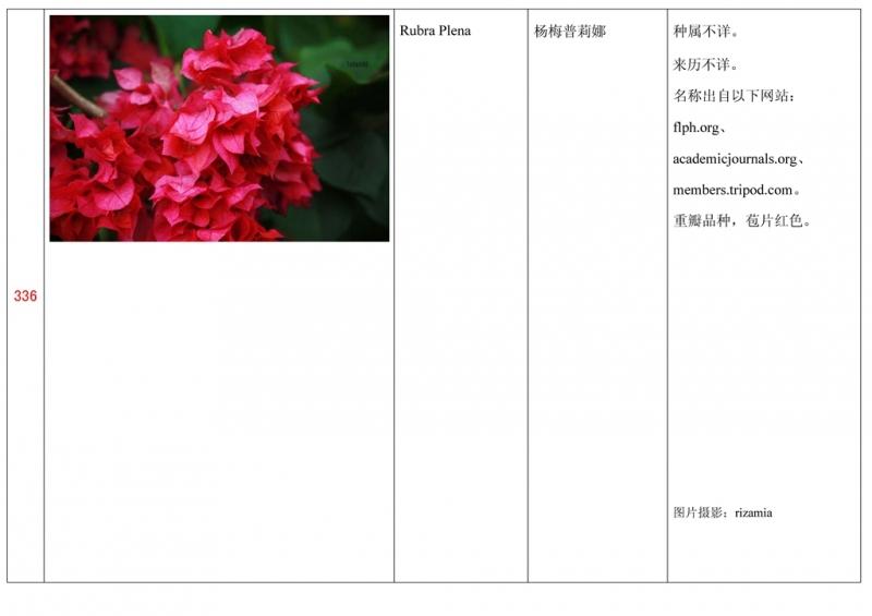 名称未核准的三角梅栽培品种收录表337.jpg