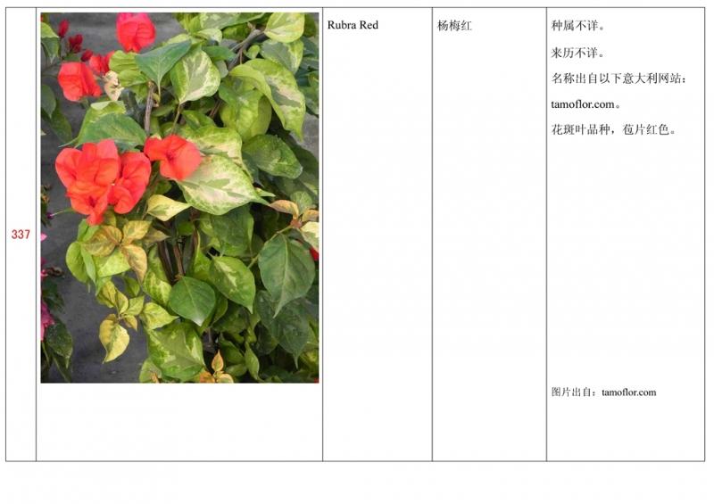 名称未核准的三角梅栽培品种收录表338.jpg