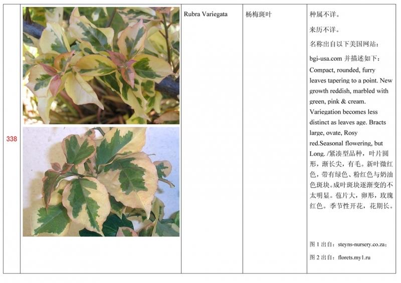 名称未核准的三角梅栽培品种收录表339.jpg