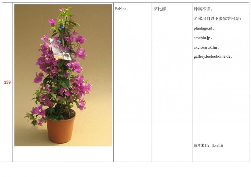 名称未核准的三角梅栽培品种收录表340.jpg