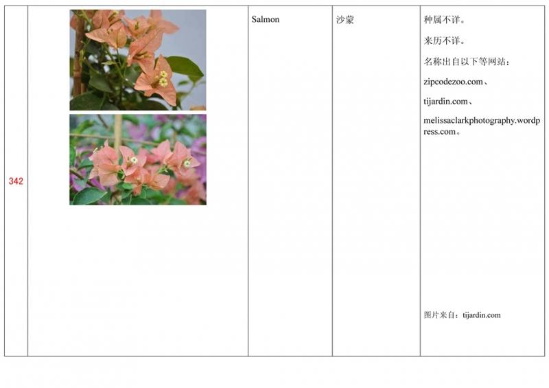 名称未核准的三角梅栽培品种收录表343.jpg