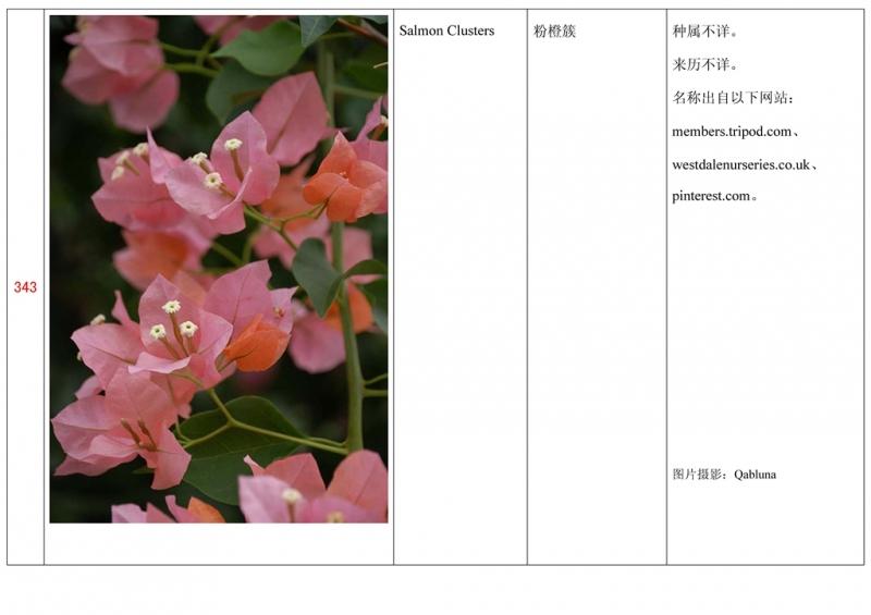 名称未核准的三角梅栽培品种收录表344.jpg