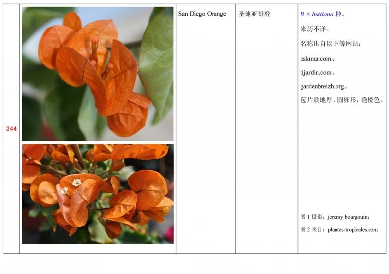 名称未核准的三角梅栽培品种收录表345.jpg