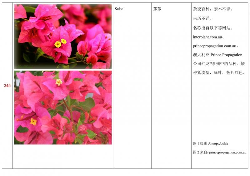 名称未核准的三角梅栽培品种收录表346.jpg
