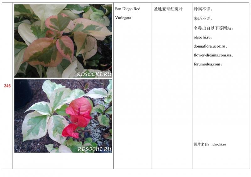 名称未核准的三角梅栽培品种收录表347.jpg