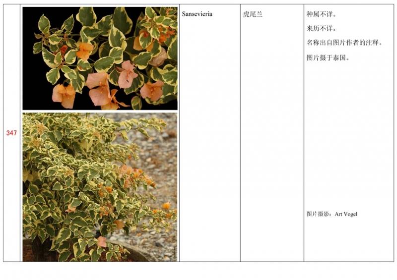 名称未核准的三角梅栽培品种收录表348.jpg